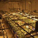 Cannabis Industry Needs HVACR Contractor Partners